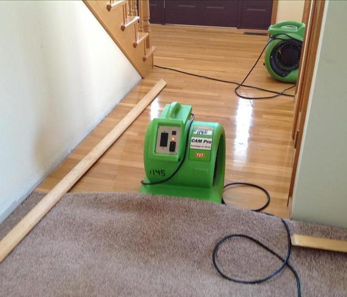 Mold Remediation Keeping Mold out of Your Carpet with SERVPRO® of Springfield